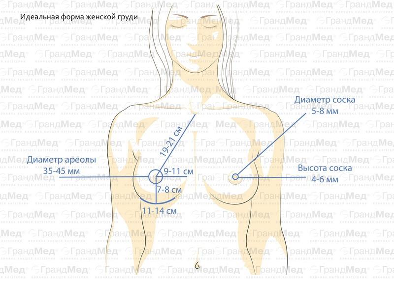 Форма груди девушек фото 592-751